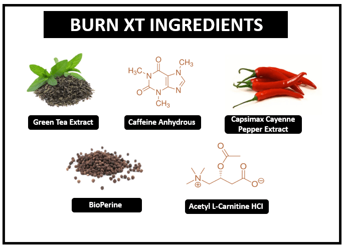 ingredients of burn xt